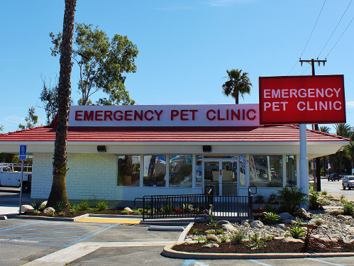 Clinic Tours Emergency Veterinarian And Animal Hospital
